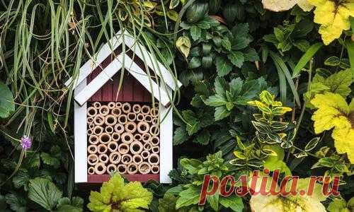 Домик для насекомых: правила строительства. Видео