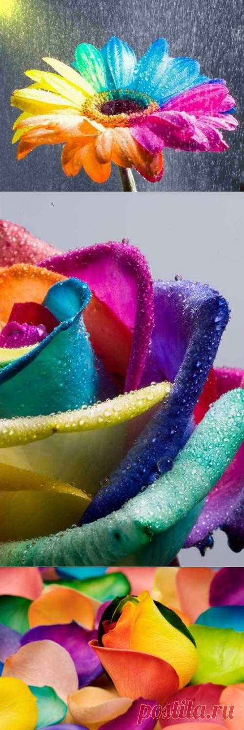 Разноцветные цветы (20 фото) » Триникси