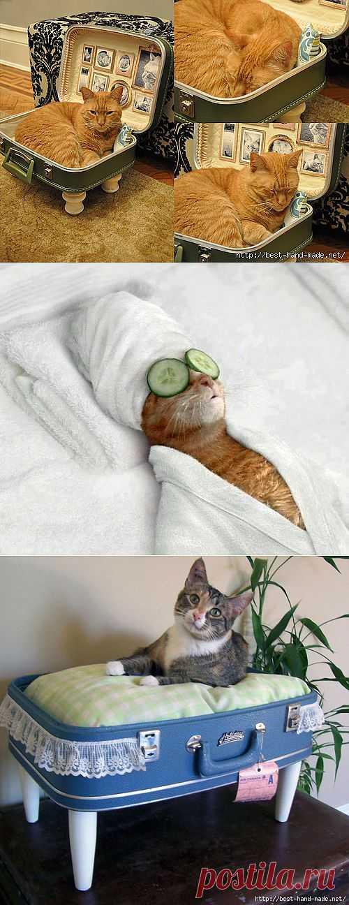 Кошачье рукоделие:) Мурлыки из ткани и полезности для домашних любимцев.