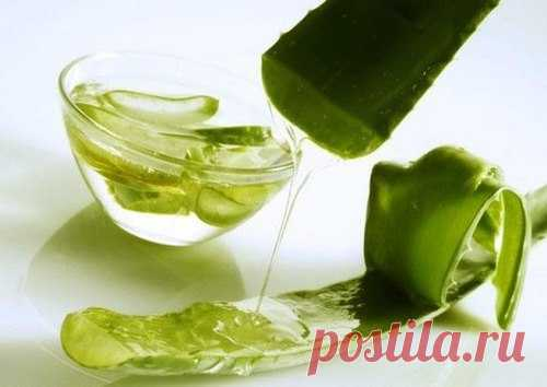 Рецепт молодости: Биостимулированный сок алоэ
