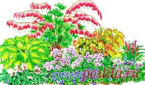 Цветник для полутени на Sadogolik.ru
