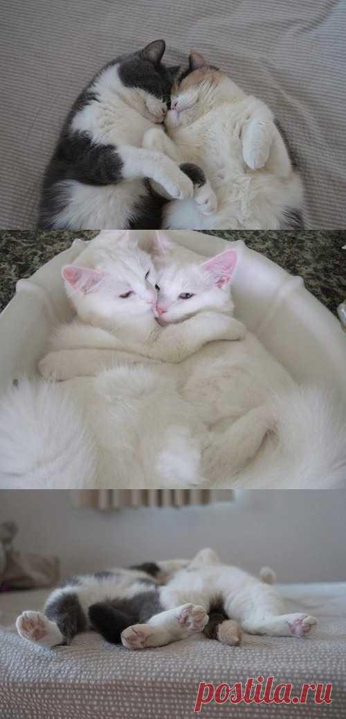 Это любовь )