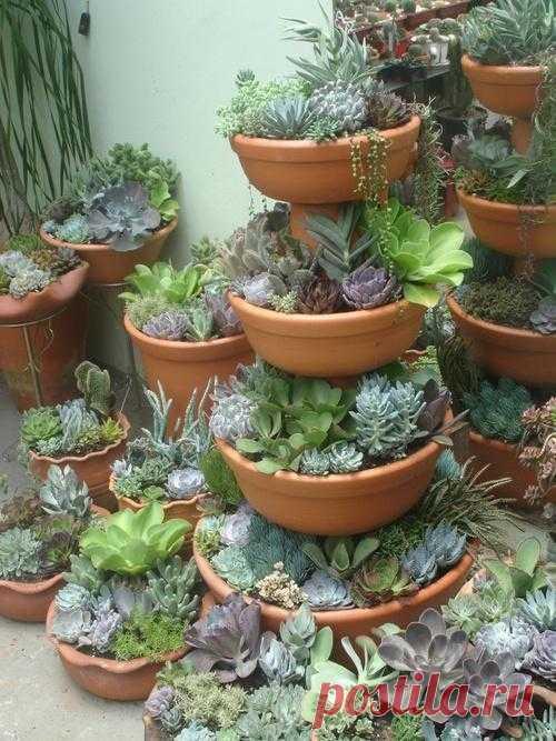 Не цветущие растения можно использовать в ландшафтном дизайне