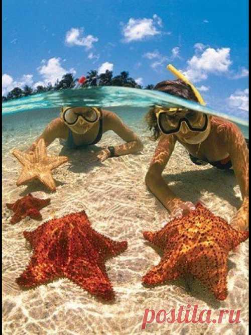 Bajo el agua con las estrellas de mar. Las islas Caymán grandes