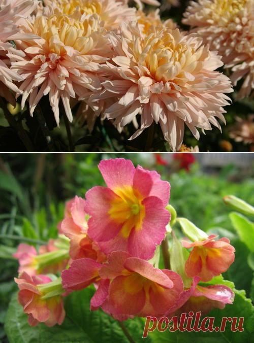 Многолетние цветы, которые лучше размножать вегетативно