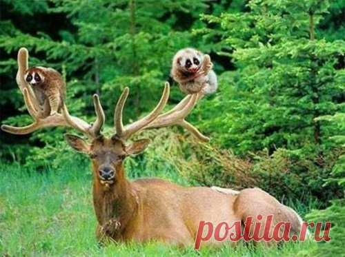 Вот это да!!! Невероятная и удивительная дружба между животными!!! Много фоток!!! — Сияние Жизни