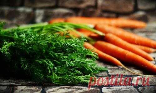 Морковная ботва в народной медицине: польза и рецепты