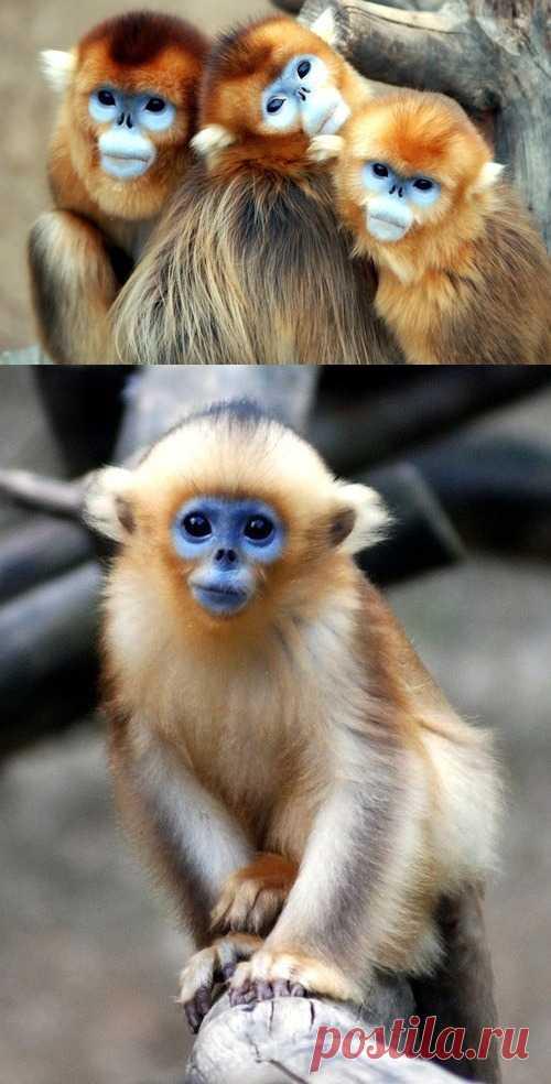 Какие необычные обезьяны
