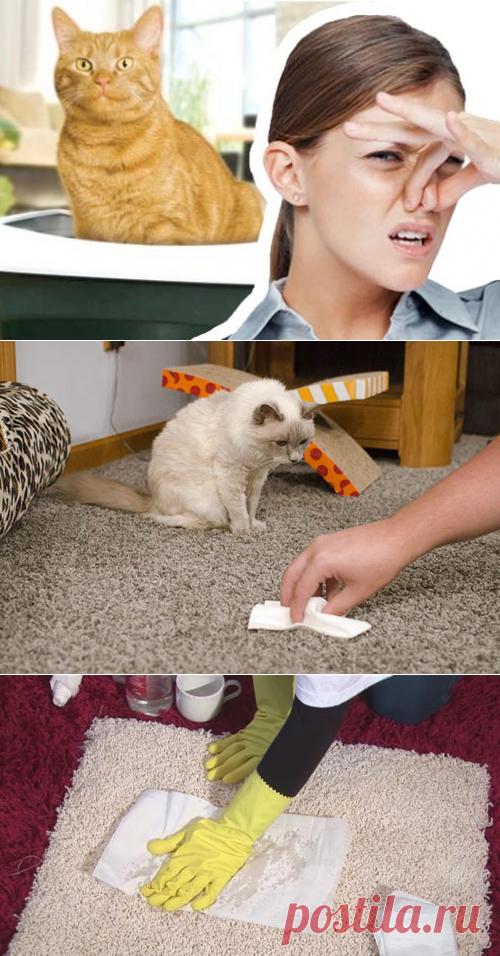 Как вывести запах кошачьей мочи с дивана, ковра, обуви и т. п.?