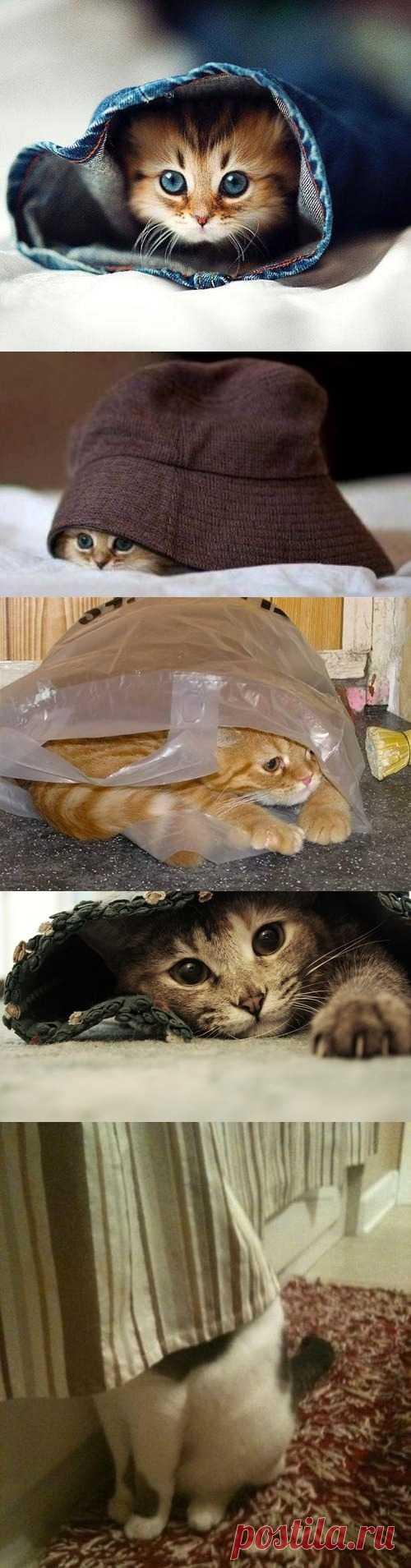 А кто это у нас тут спрятался? ))