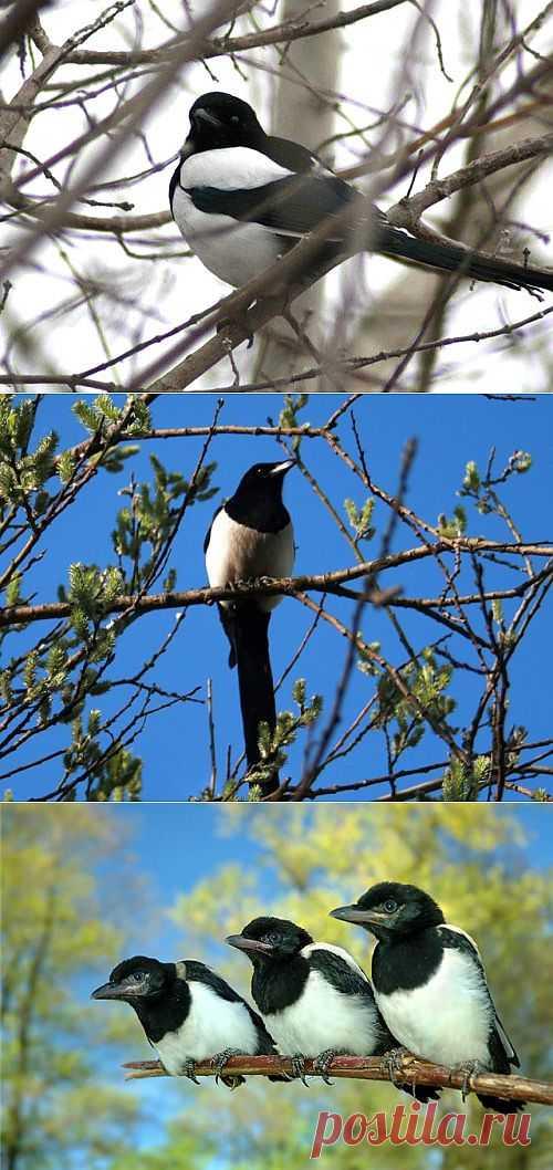 http://my.mail.ru/community/birds55555/125902CDB0FE7B3D.html