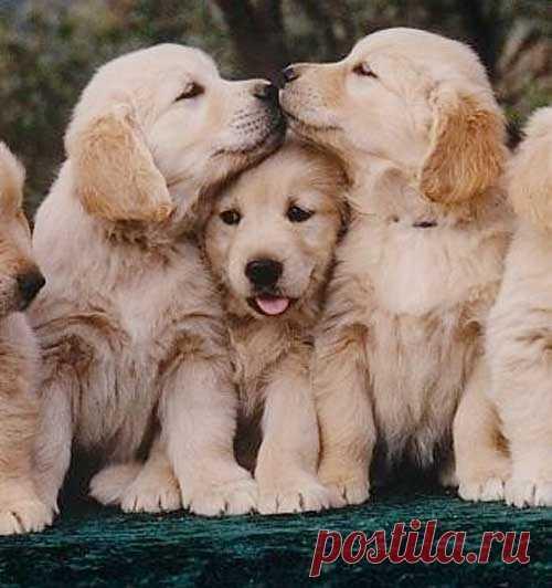 Какие собаки! ))