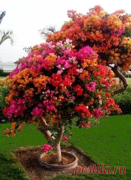 Цветущие деревья и кустарники могут сыграть важную роль в вашем саду