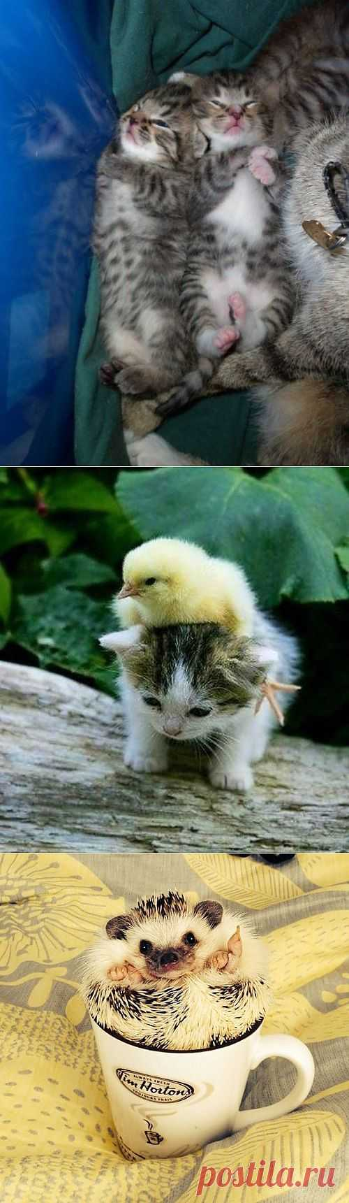 (+1) a subject - Animals cuties | Cool pictures