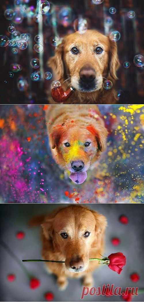 Самый счастливый пес в мире