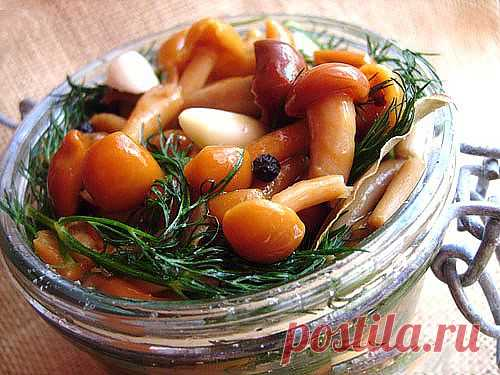 Засолка грибов: способы, этапы, особенности, тонкости и секреты заготовки грибов на зиму / Простые рецепты