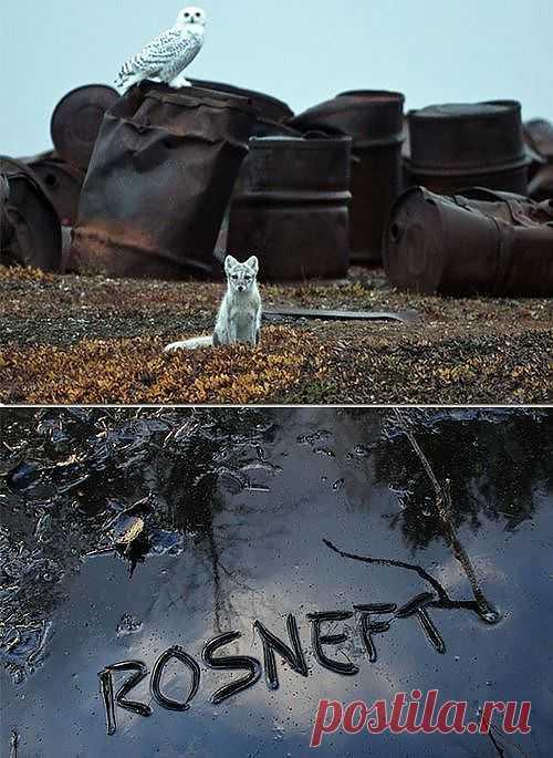 На днях «Роснефть», в ответ на претензии Гринпис, пообещала сделать Арктику чистой: вывезти весь накопленный мусор - старый, ржавый металлолом, валяющийся там со времен СССР. Но странно, что «Роснефть» не рассказала, как будет очищать Арктику от нефтяных разливов во льдах, или как уберет уже существующие на материке?! Посмотрев на разливы «Роснефти», можно предположить, что станет с Арктикой через несколько лет. Пока не поздно, мы должны остановить добычу нефти на Арктическом шельфе!