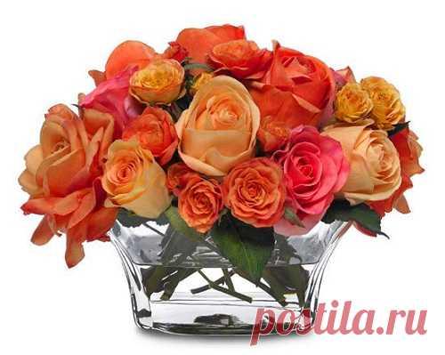 Как вырастить розу из срезанного цветка? С этим способом и садовник не нужен. - Кейс советов