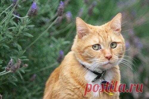 Один день из жизни Кота или приключения разбойника