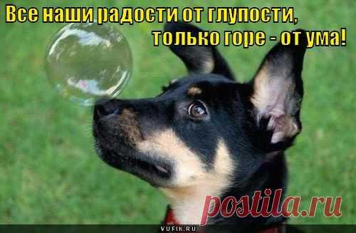 Смешные картинки собак