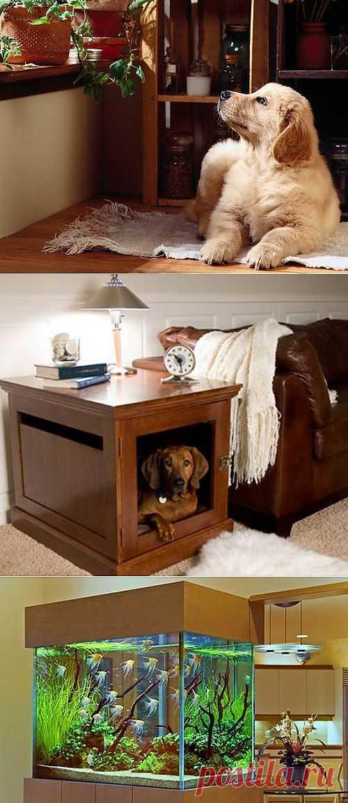 Какое животное завести в квартире | Дом Мечты