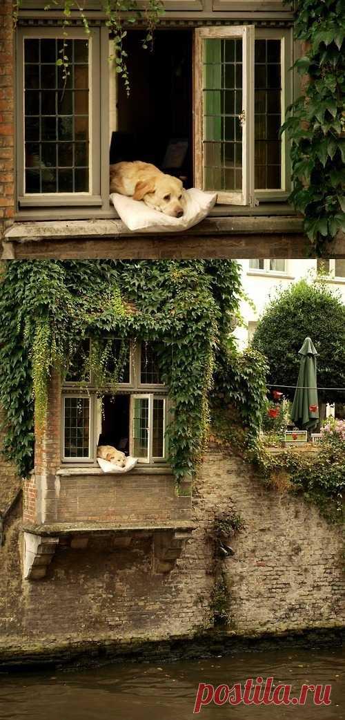 Собачка в окне