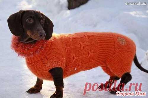 вязаная одежда таксы своими руками фото вязание для животных постила