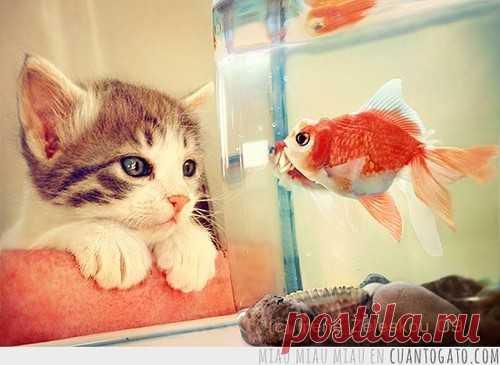A las gatas, por lo visto, la opinión de aquel, en que es posible mirar infinitamente mucho tiempo))