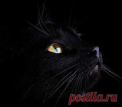 Тайна черной кошки | ЛЮБОВЬ ПРУСИК | Яндекс Дзен
