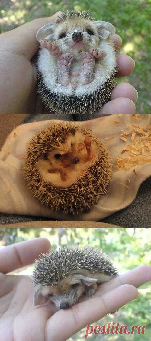 What hedgehogs!