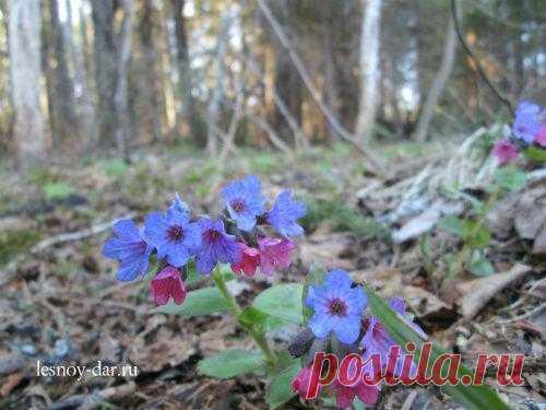 Фоторепортаж из весеннего леса. Несколько мгновений весны