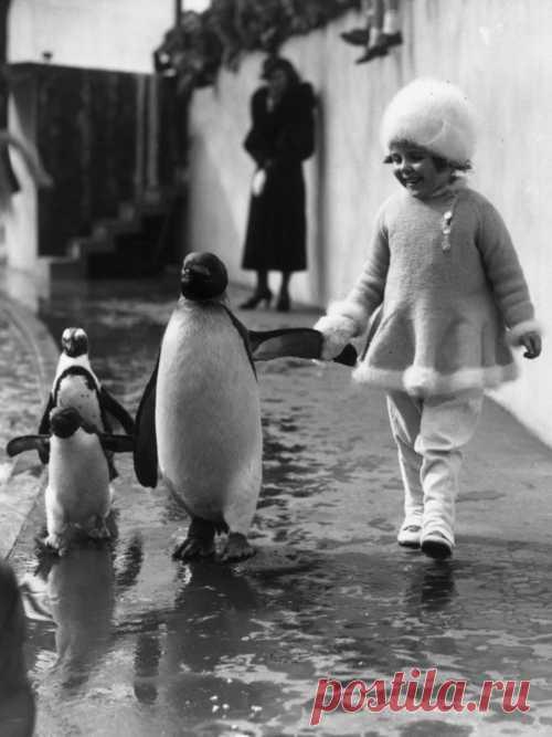 Por la mano con el pingüino importante – abruptamente)