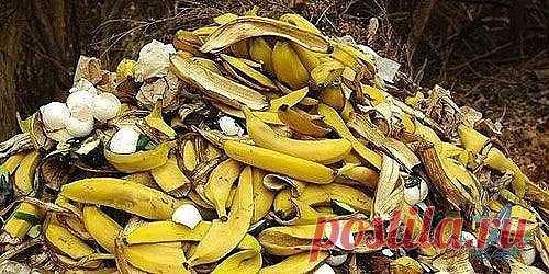 Удобрение из банановых шкурок: 15 необычных способов их применения в огороде Банановые шкурки способны творить чудеса в наших садах и огородах. Высушенные, смолотые в порошок, свежие или настоянные они работают в качестве органического удобрения, внекорневой подкормки, средства для привлечения опылителей и это еще далеко не не все, на что они способны. Представляем вашему вниманию 15 необычных способов применения банановой кожуры в огороде, о которых вы даже не подозревали...