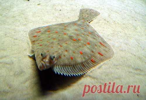 Рыба запеченная 416 рецептов  фото рецепты  ГотовимРУ