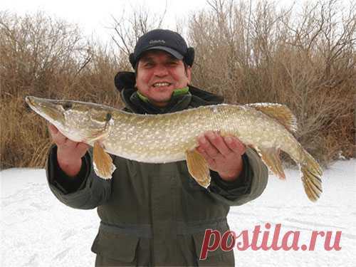 Приманки для зимней ловли или как гарантировать себе улов в 20-30 кг.