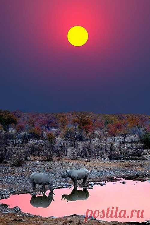Розовый закат в природном заповеднике Этоша