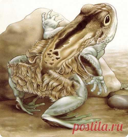 Непричесанная квакушка http://aquariumistika.mirtesen.ru/blog/43648009547