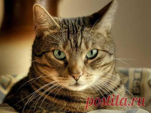 Какую энергетическую пользу несет кошка в доме