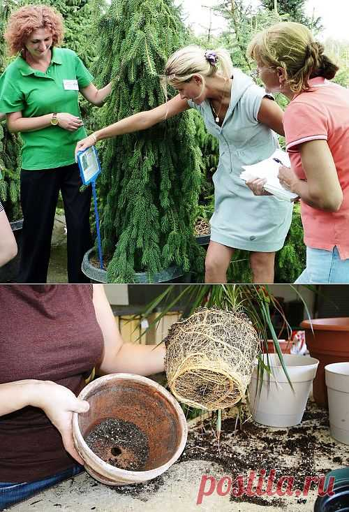 (+1) тема - Как проверить растения перед покупкой | Полезные советы