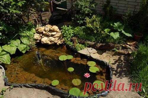 Красивый пруд из ванны на даче — фото | My Milady