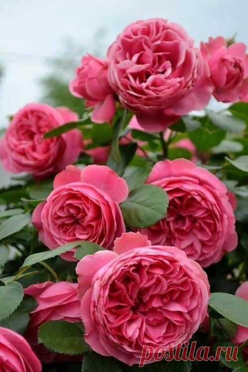 cute, pretty y lovely imagen en We Heart It