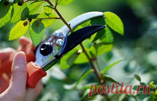 Как ухаживать за кустами и деревьями осенью