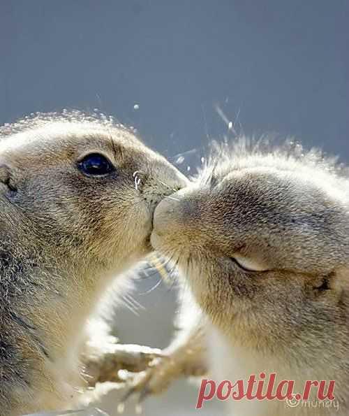 поцелуй - это здорово !!!