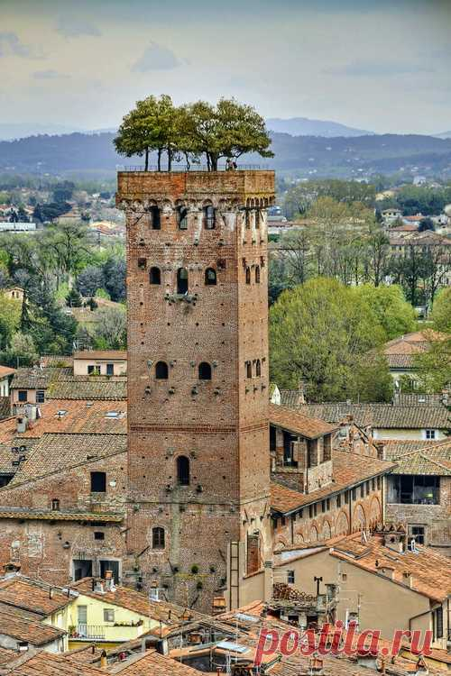 Деревья на крыше башни! Башня Гуиниджи, Лукка. Италия