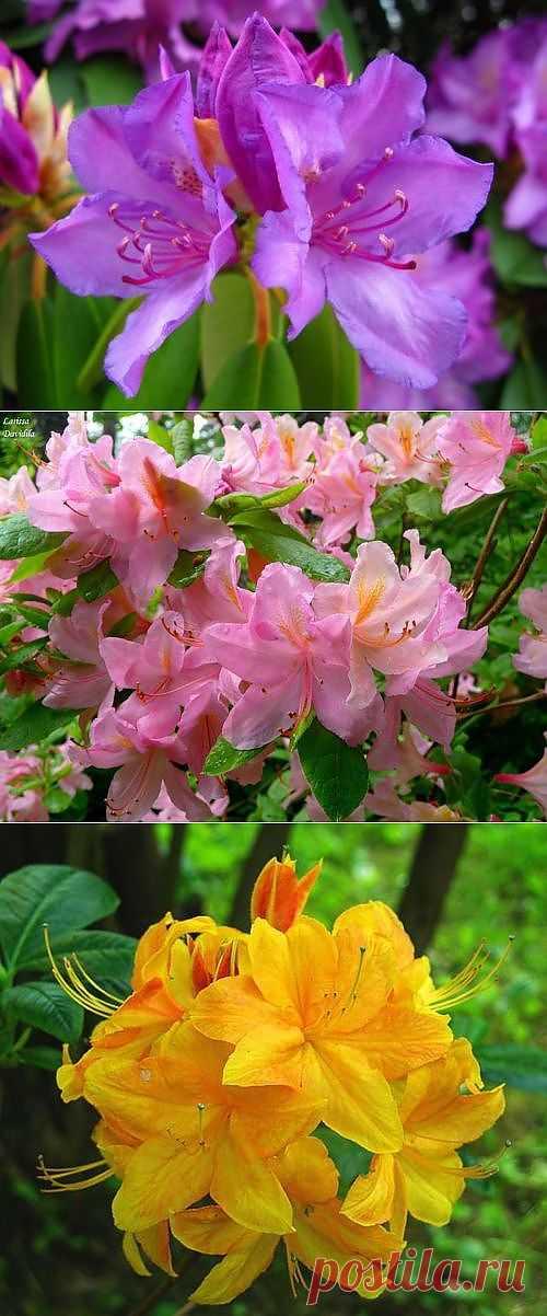 «Греющие» цветы