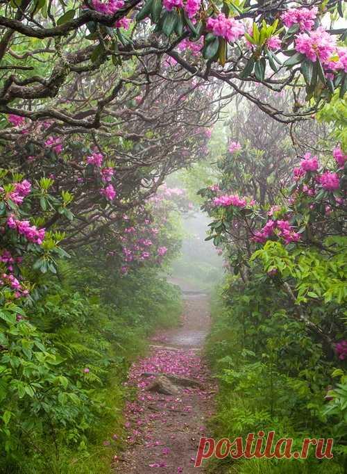 Весна. Цветущий сад в Северной Каролине, США