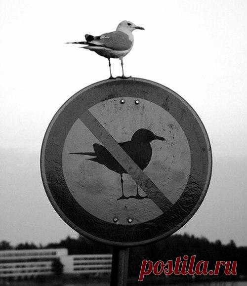 Нарушая все запреты