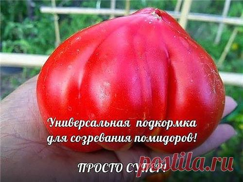 Повышенная урожайность помидоров.