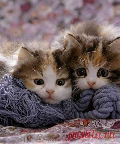 Worried Kitten Faces! | Cute Kitten | House Cat | Cat Smirk