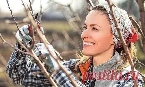 Осенняя обрезка деревьев и кустарников. Видео